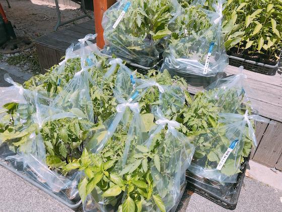 野菜苗-1
