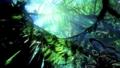 Avatar Director Cameron: NASA Sees Earth Connections