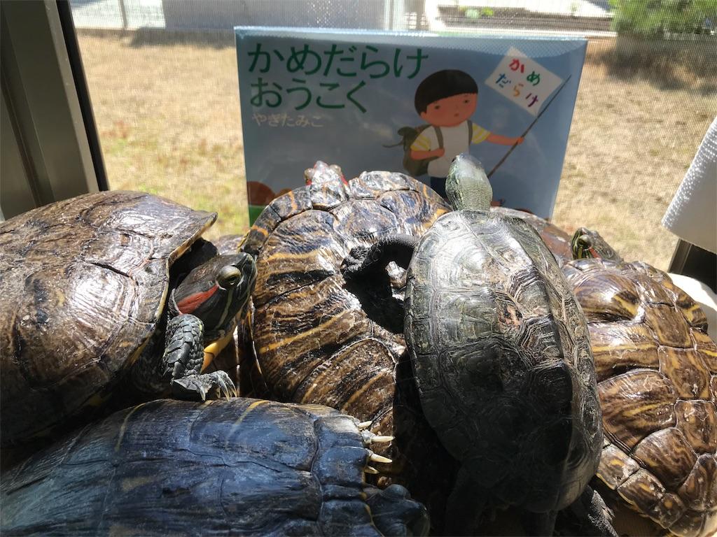 f:id:kamekichi58:20180523003546j:image