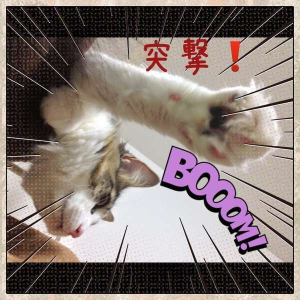 右手を上げて「突撃!」と勇ましい猫