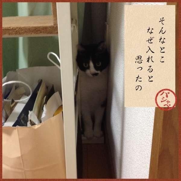 「そんなとこ、なぜ入れると思ったの」狭い隙間に挟まる猫