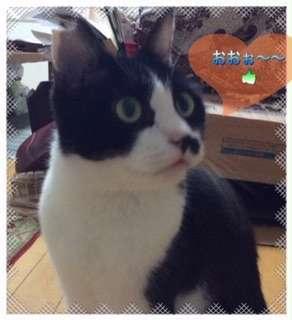 「おおお!」と感心している猫