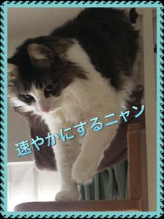 キャットウオークを降りながら、此方を見て「速やかにするニャン」という猫