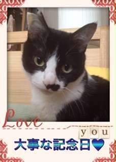 「大事な記念日ハートマーク」とLOVEのフレームに収まり、ポージングする猫