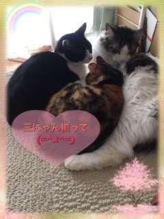3匹で寄り添って寝ている猫「三にゃん揃って」と幸せそうな姿