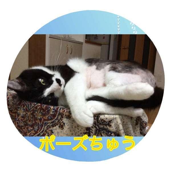 手足を4本絡めて「ポーズちゅう」の猫