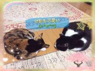 「別々でも可愛い」離れているが、向かい合って同じ様に丸まって寝ている猫2匹