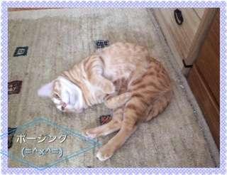 足をクロスさせて、深く身体を折って「ポージング」している猫
