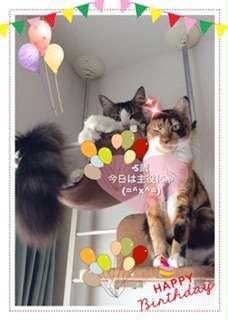 5歳の誕生日「今日は主役」とウィンクする猫