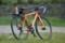 [自転車][New Balance CX-5002]