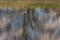 京都新聞写真コンテスト 亀岡平の沢池の春