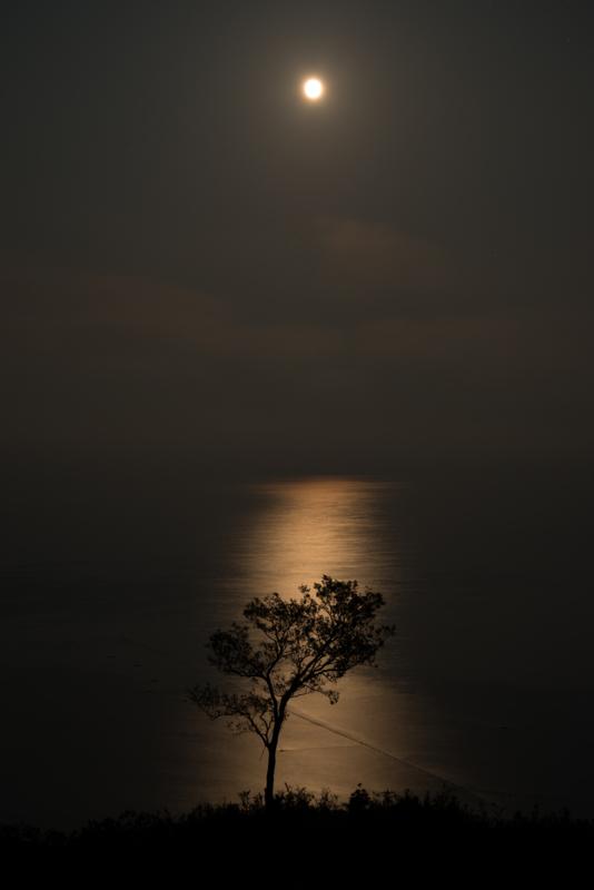 京都新聞写真コンテスト 光の道 月の道