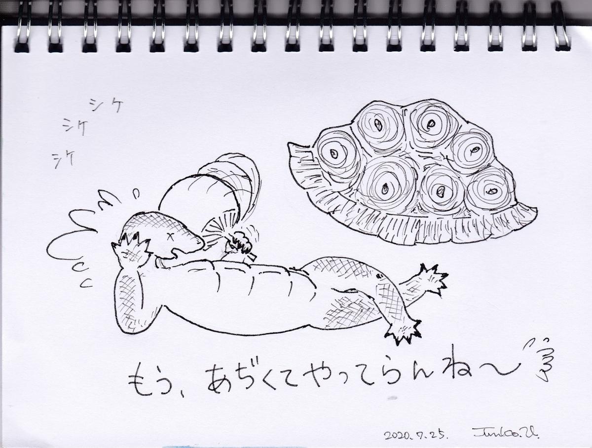 f:id:kameusakiji:20200725213616j:plain
