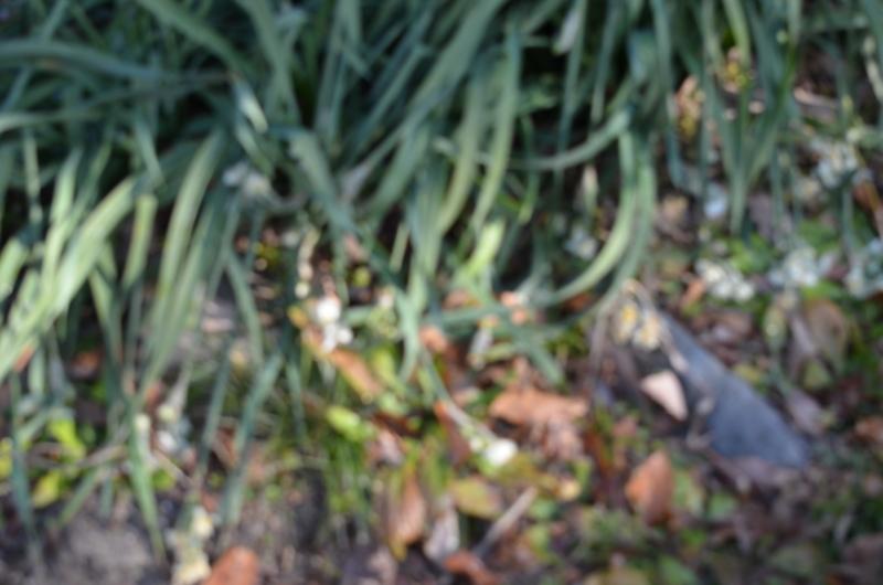 f:id:kameyamasanso:20120108092526j:image