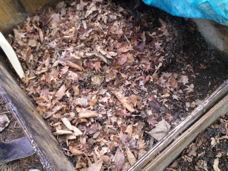 f:id:kameyamasanso:20120129102817j:image
