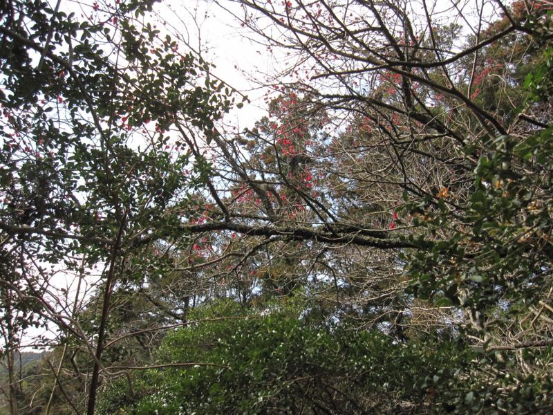 f:id:kameyamasanso:20120311101333j:image