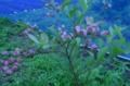 f:id:kameyamasanso:20120617095129j:image:medium