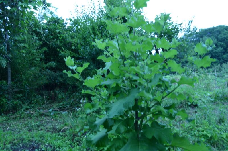 f:id:kameyamasanso:20120617100035j:image