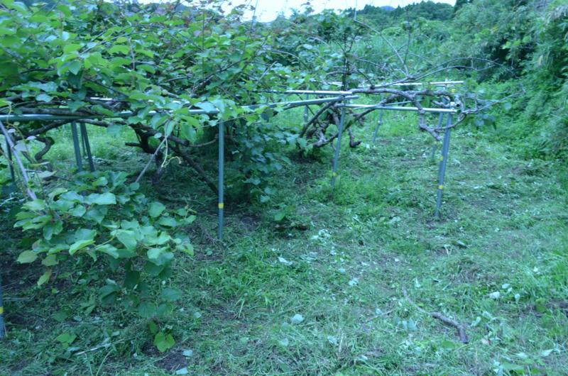 f:id:kameyamasanso:20120617130844j:image