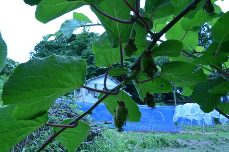 f:id:kameyamasanso:20120617130917j:image