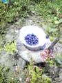 f:id:kameyamasanso:20120627115635j:image:medium