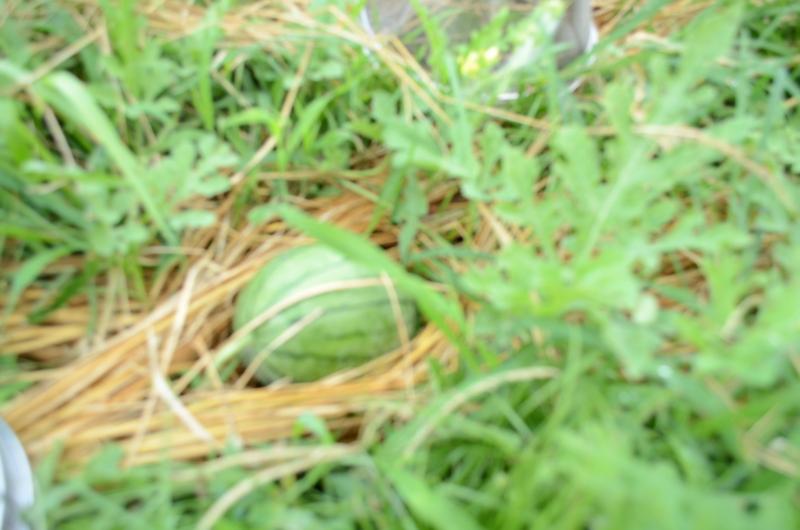 f:id:kameyamasanso:20120819104727j:image