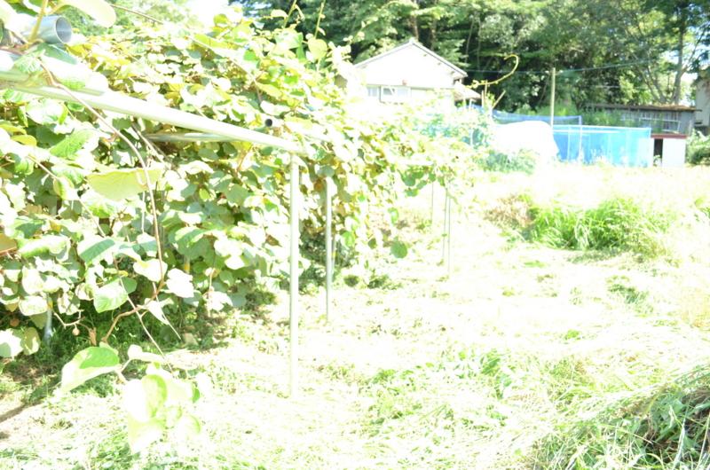 f:id:kameyamasanso:20120819144430j:image