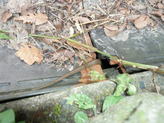 f:id:kameyamasanso:20121022103220j:image