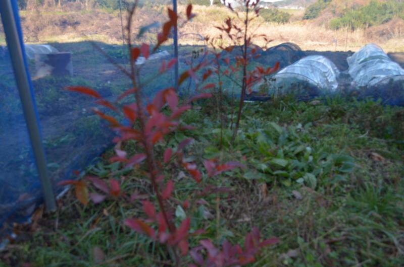 f:id:kameyamasanso:20121209100746j:image