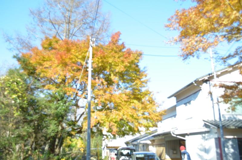 f:id:kameyamasanso:20121209101553j:image