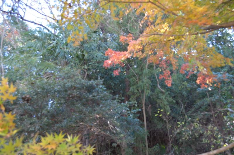f:id:kameyamasanso:20121209101640j:image