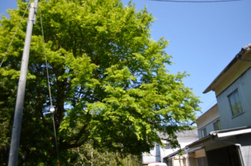f:id:kameyamasanso:20130428095130j:image