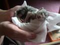 おそらく生後2日。獣医さんにもかかったが助からなかった。