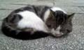 2010年9月22日 出雲大社で会ったネコ