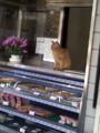 豆腐屋の店番をしていた猫氏