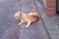 一昨日、実家の門前で寝ていたネコ