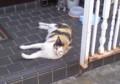 隣家の玄関先にもネコが寝ていた