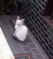 新人の白チビは隣家の玄関先