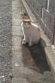 ご近所ネコ。うちのうづきの母猫なので「ママ」