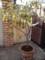 喫茶店に檸檬の鉢植え