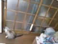 ネコ出入り口はふさがれている