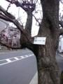 この木は168番
