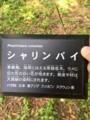 野川公園。シャリンバイ
