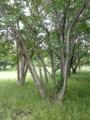 武蔵野の森公園。でかいクワ