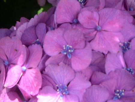 開花している