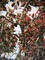 樹上の木の実