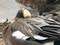 ヒドリガモ(風切り羽根が見える)