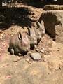 ウサギ@武蔵野の森公園