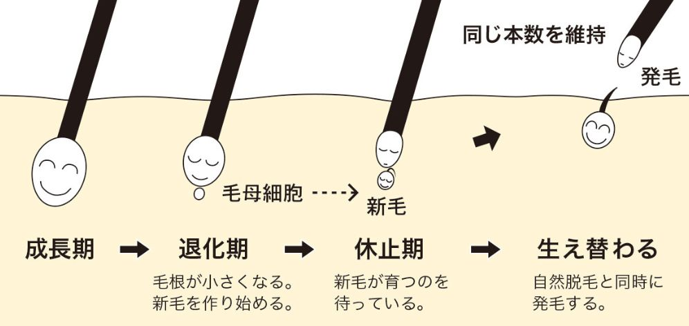 f:id:kami-nayami:20190912144645j:plain