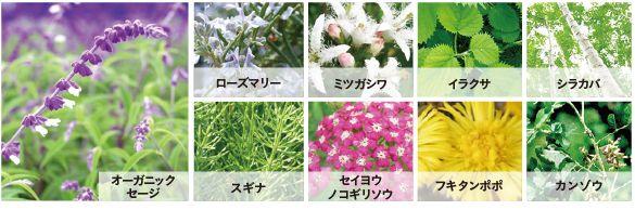 f:id:kami-nayami:20210409151308j:plain